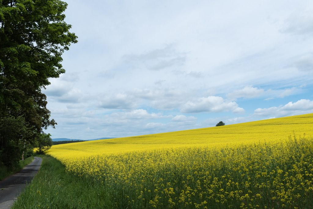 Landschafts Foto mit dem Zeiss 35mm